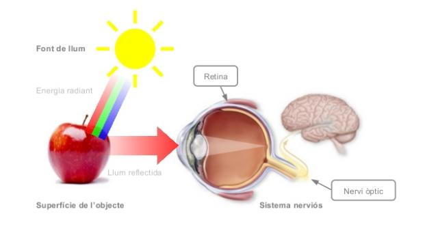 Mecanisme de la visió.